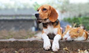 Pet Transportation Service